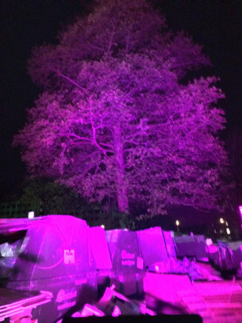 licht roze boom Liquidx
